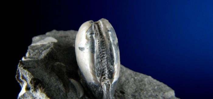 Razstava Fosili iz okolice Kamnika