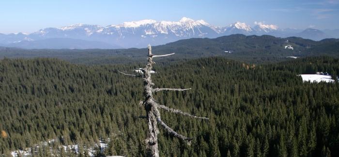 Odprtje gostujoče razstave Gozdovi Kranjske industrijske družbe
