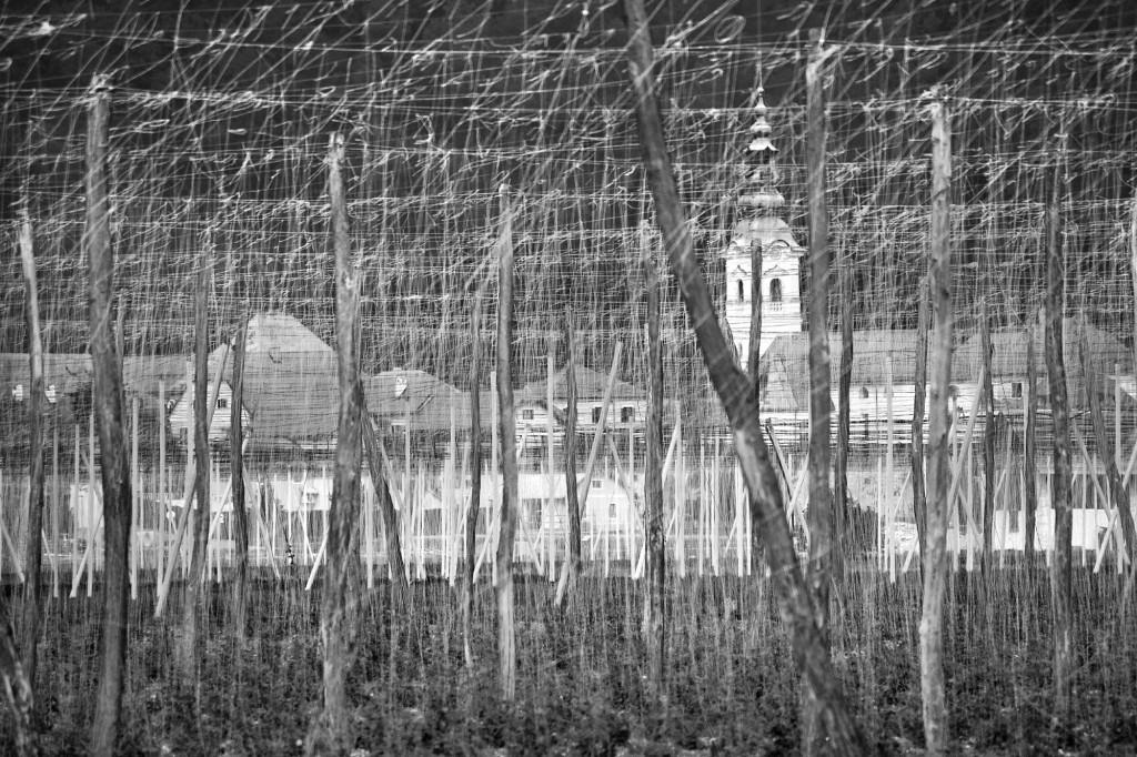 Andreja Ravnak _ hmeljeva polja