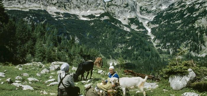 Odprtje fotografske razstave Bohinjske planine pred štirimi desetletji