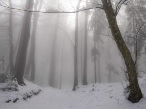 6 Zima IIl feb 2016  Smarjetna gora