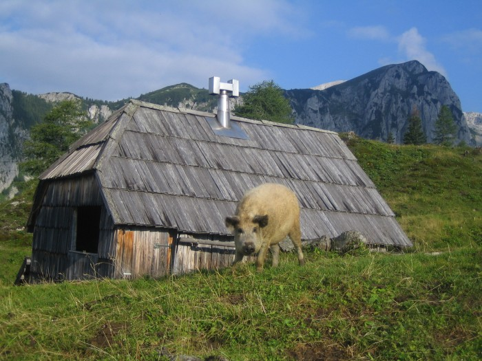 Muzejski večer Bohinjske planine nekoč in danes