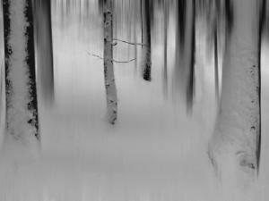 Zima jan 2015 Smarjetna gora