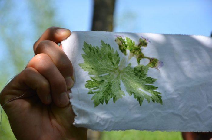 Festival alpskega cvetja – EKO print – Mandale in pejsaži